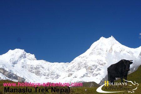 Manaslu Trekking | Holidays adventure in Nepal, Hiking, Trekking in Nepal, Himalayan trekking & tour operator agency in Nepal.