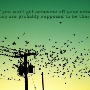 Flightless Birds Quotes About Birds Just Happy Quotes Janifer