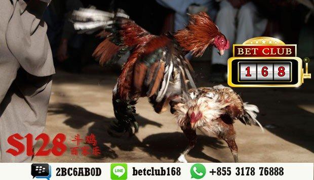 Taruhan S128 Sabung Ayam Online Terpopuler Bonus Deposit