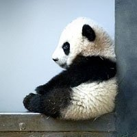 30 Baby Animals That Will Make You Go 'Aww' | Bored Panda