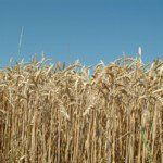 Qui profitera de la sécheresse américaine cette année? | La Quotidienne d'Agora