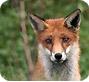 Pétitions pour la défenses des animaux : soutenez l'action de la fondation en signant les pétitions contre la maltraitance animale
