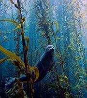 Protection des mers et des animaux marins