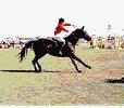 le blog de equitation-62