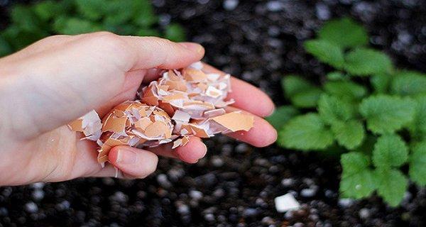 Pourquoi vous devriez mettre les coquilles d'oeufs dans votre jardin!