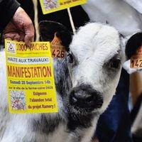 Action contre la ferme des « Mille vaches » : cinq militants en garde à vue