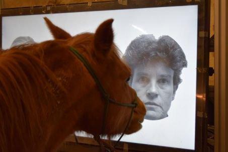 Les chevaux savent reconnaître les visages humains