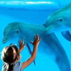 Un arrêté met fin à la captivité des dauphins en France