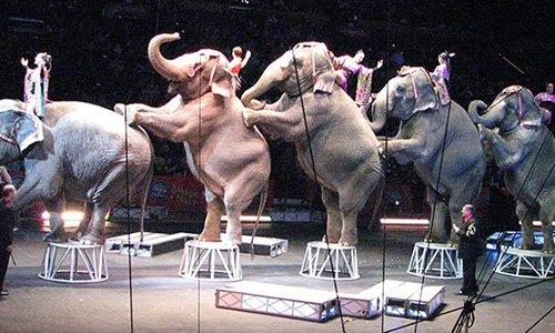 Pétition : Frontignan refuse les cirques avec animaux