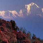 Ghorepani Trekking |Glorious Himalaya Trekking