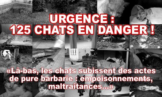 URGENCE : 125 CHATS EN DANGER, SAUVONS-LES !  (code 1 pour l'appel du coeur)