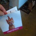 Voici un chat qui n'aime pas noel !!