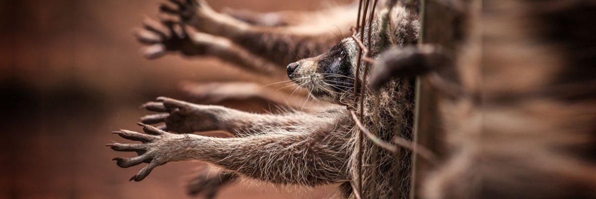 pétition pour la fermeture des fermes à fourrure en europe