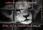 Non à la maltraitance des animaux!!!!!!!!!!!!!!!!!