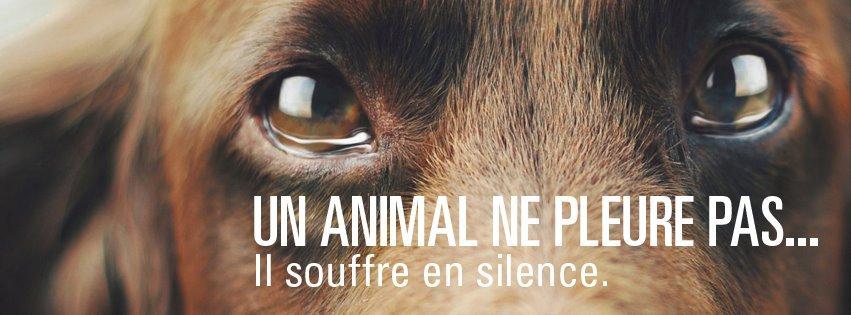 30 Millions d'Amis (Officiel) | Facebook