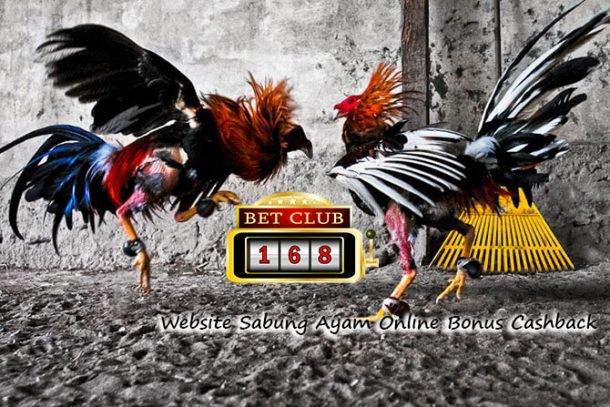 Website Sabung Ayam Online Bonus Cashback