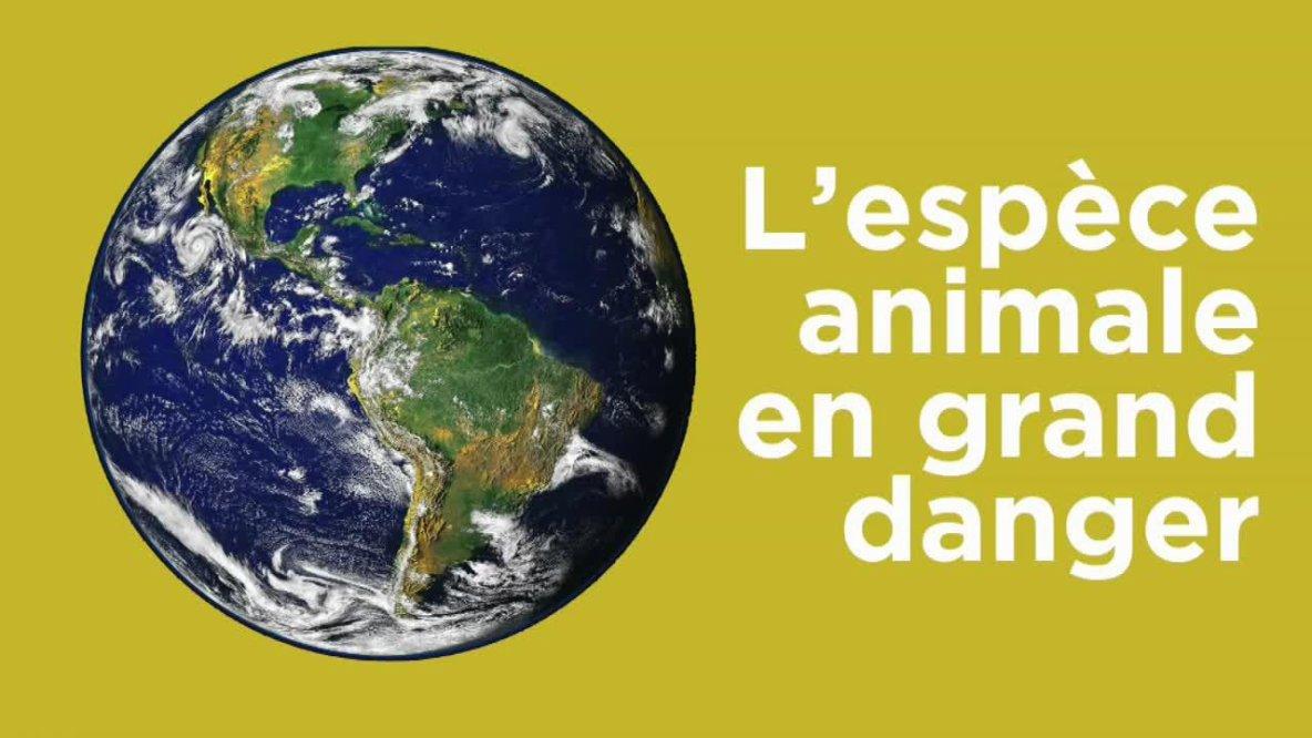 Lions d'Afrique, orangs-outans, girafes… Ces espèces qui disparaissent petit à petit de la Terre...