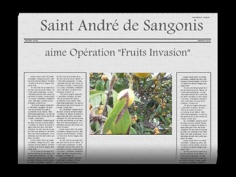 """Le maire aime opération """"Fruit Invasion"""" Plantation dans la ville de St Andrée de Sangonis"""