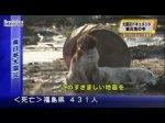 Japon : Le chien qui ne voulait pas abandonner son compagnon blessé