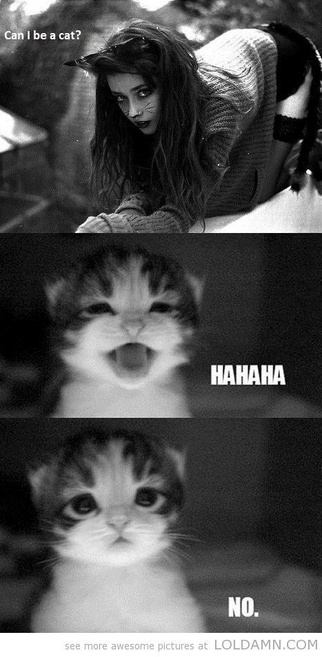 Cute kitty meme