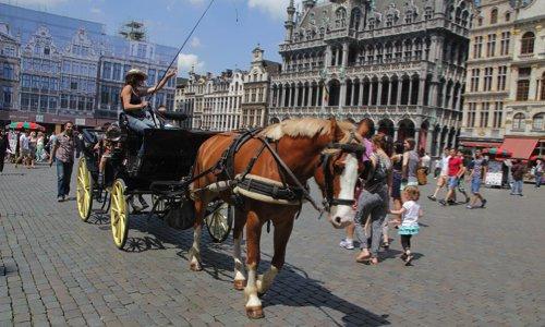 Pétition : Pour l'interdiction des calèches touristiques à Bruxelles