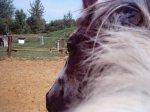 le blog de Harry-Horse