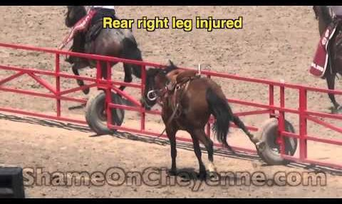Petition · Don't Play at the Brutal Cheyenne Frontier Days Rodeo · Change.org