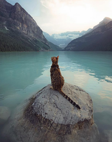 Miaoubox | La box cadeau pour votre chat