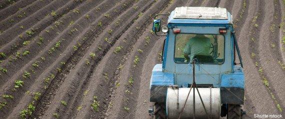 Les 10 fruits et légumes les plus contaminés par des pesticides