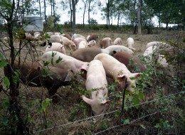 Crise de l'élevage : les 5 mensonges de la FNSEA
