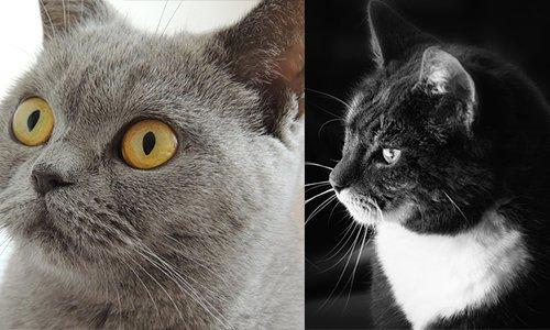 Pétition : Deux chats morts mystérieusement à Bussy les Daours ! Arrêtons le massacre !