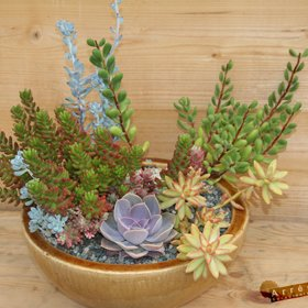 Arrée Succulentes - LE Site !!! Les conseils, le catalogue ... Le bonheur !!