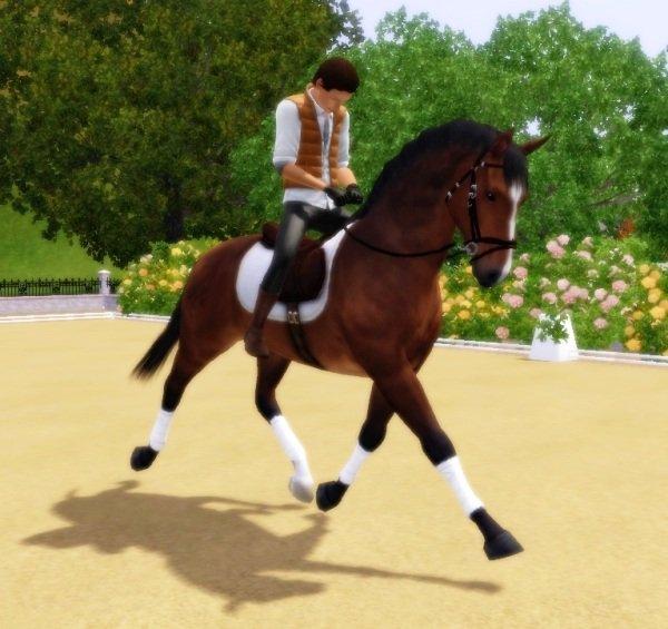 Poses - Illusion Equestrian