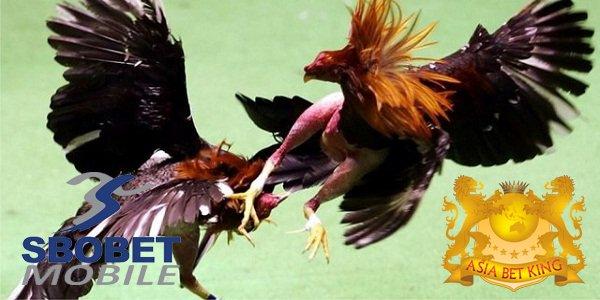 SBOBET Sabung Ayam Online Live Filipina Terpercaya