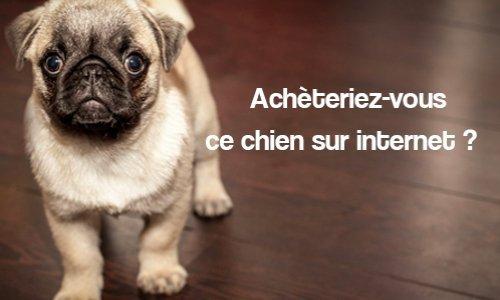 Pétition : STOP au commerce de chiens et de chats par les particuliers