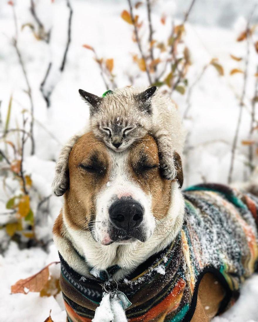 Ce chat et ce chien adorent voyager ensemble, et leurs photos sont absolument épiques *-*
