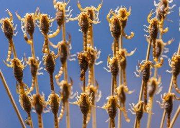 Elever et manger des insectes, une solution écolo pour nourrir la planète