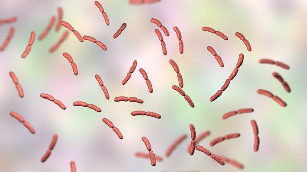 Le microbiote vaginal