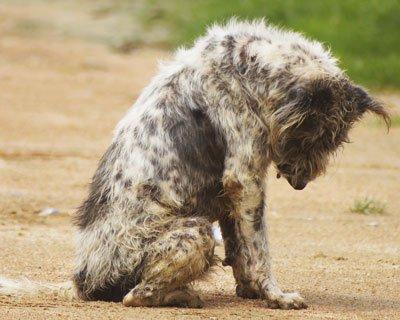 Pour aggraver les peines de justice des actes de cruauté sur les animaux