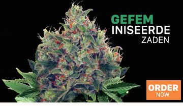 Cannabis Zaden - Ministry of Cannabis