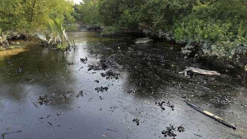 Une marée noire au Bangladesh menace des espèces rares de dauphins - Wikistrike