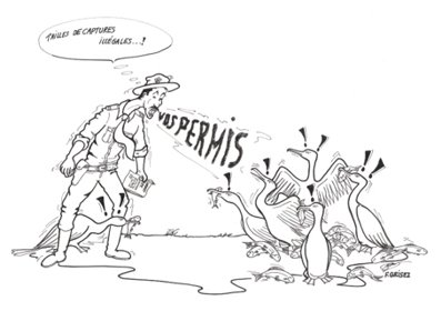 SIBW/Espces/Ecologie/Oiseaux/Grand Cormoran