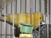 Doula canary