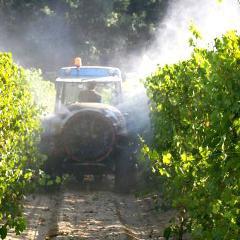 Puberté précoce: les pesticides sont la 1re hypothèse pour la forte incidence dans certaines régions (France)