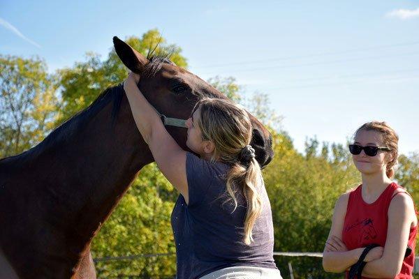 Sauver un cheval