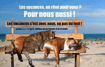 POUR MOI C EST VRAI ! ! ET POUR VOUS ? ? + Divers images drôle ...