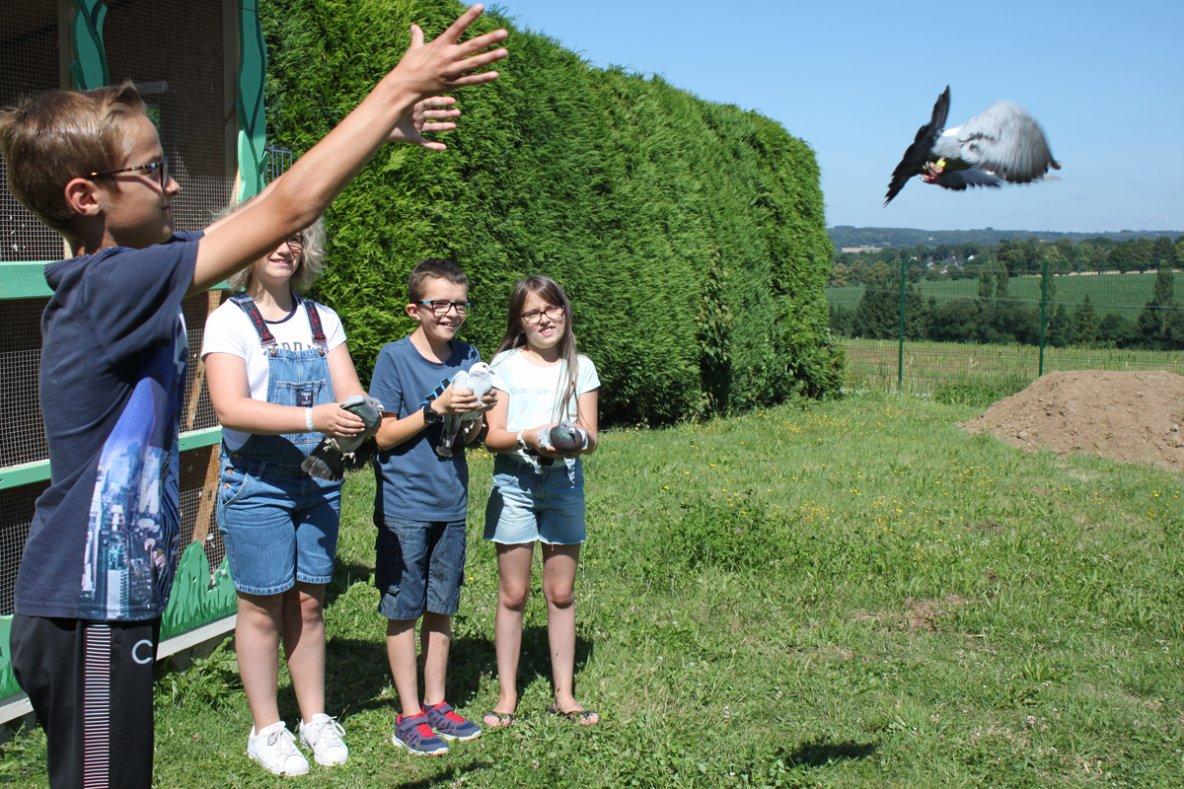 Ils communiquent par pigeons voyageurs !