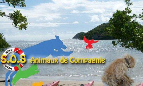 Pétition : STOP aux trafics et à la maltraitance sur les animaux de compagnie en Martinique