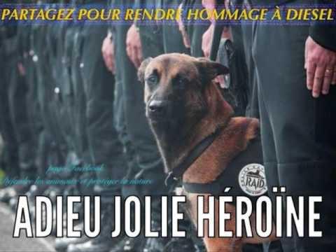 """Hommage à Diesel, une chienne """"héroïne de la nation"""""""