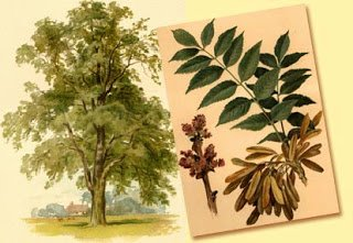 19 Different Trees You Can Use As Medicine | Self-Sufficiency
